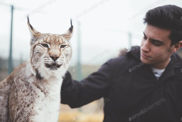 Young man stroking lynx