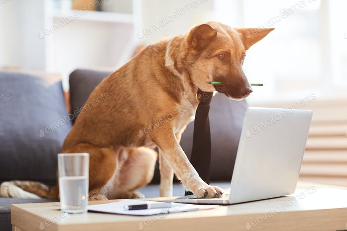 Dog Boss