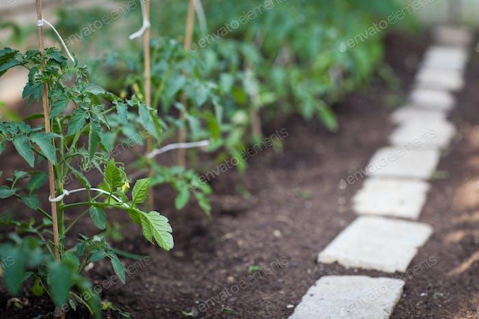 Ittle Bio/Permakultur Garten