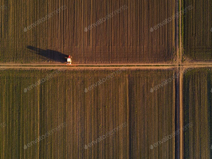Aerial view of tractor in cultivated corn maize crop field