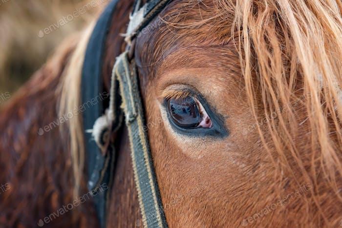 Horse d8c 4978