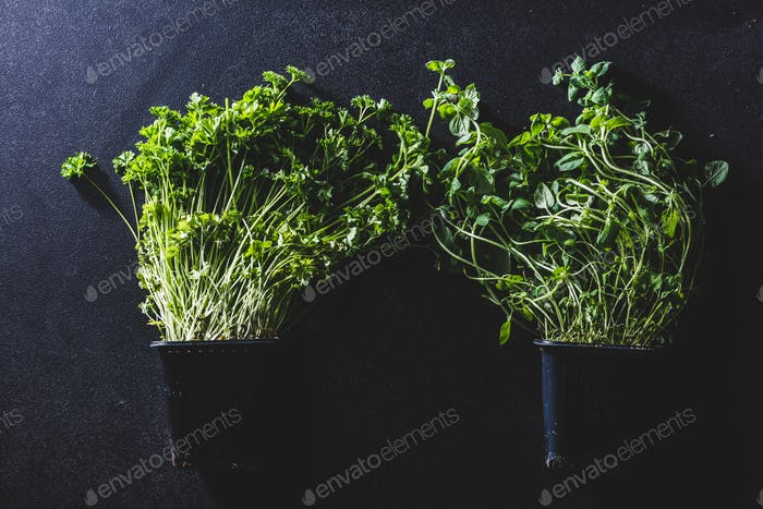 Two black pots with basil and parsley