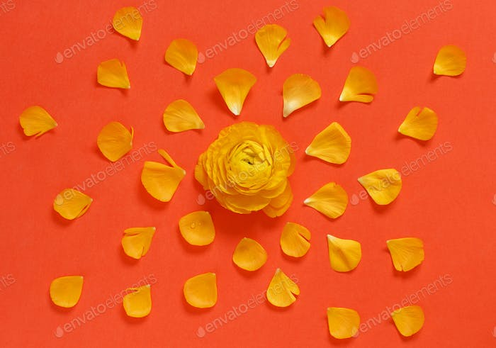 Yellow flowers and petals on a red background