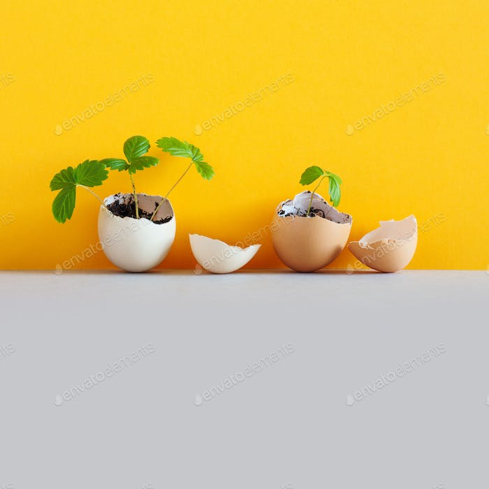 Sprouts in an eggshell. Easter new life concept
