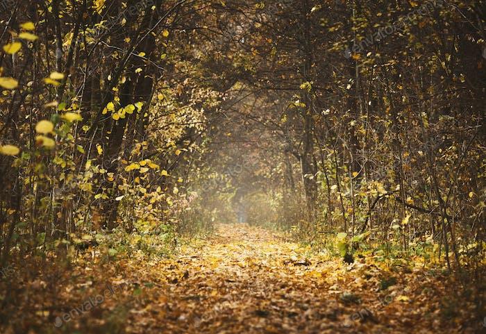 Autumn forest landscape, beautiful scene with sun beams