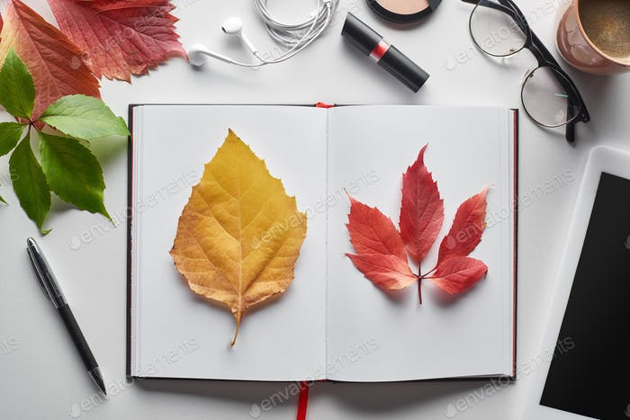 Colorful Red And Yellow Leaves of Wild Grapes And Alder Near Notebook, Cosmetics, Glasses,coffee Cup