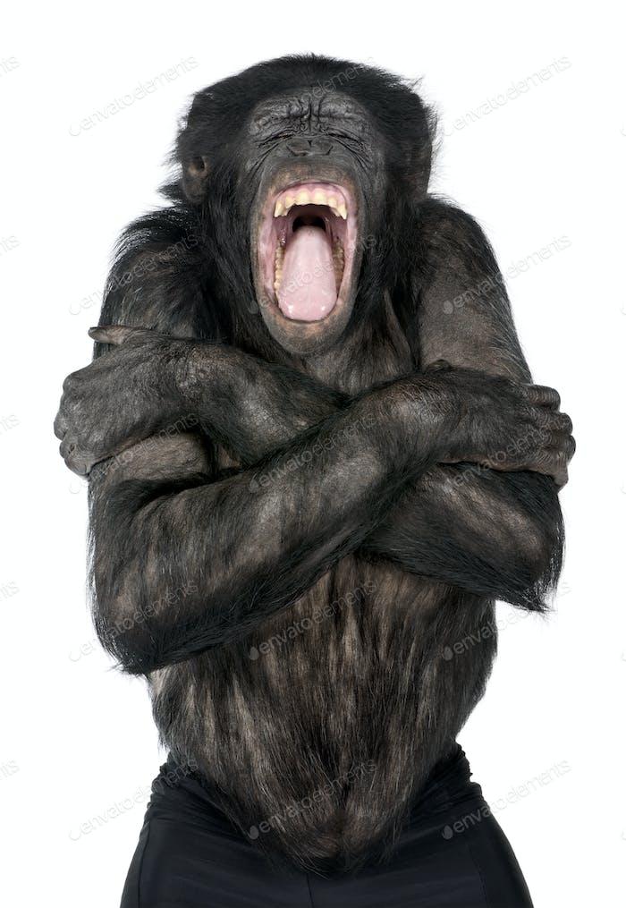 Mixed-Breed between Chimpanzee and Bonobo