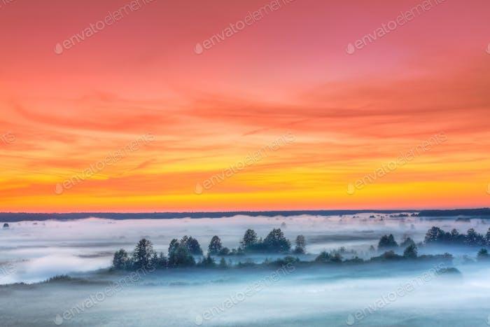 Misty Landscape. Scenic View Morning Sky Above Misty Forest. Aut