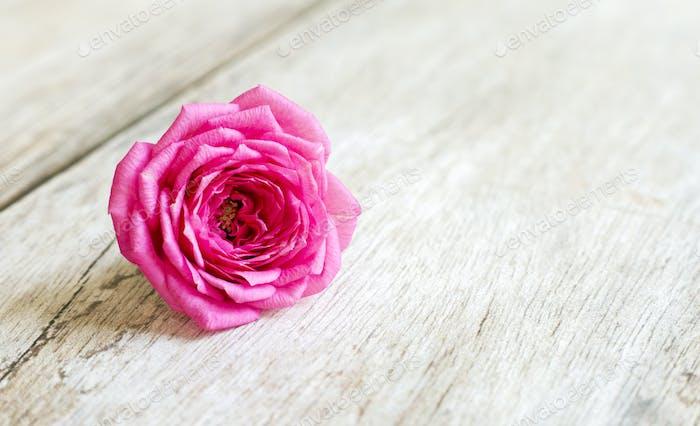 Spring, springtime concept - pink flower