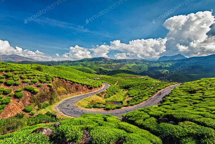 Road in tea plantations, India