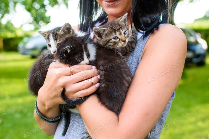 Three kittens on woman's hands cuddling happy smile