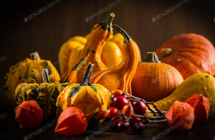 Pumpkin still life for Thanksgiving