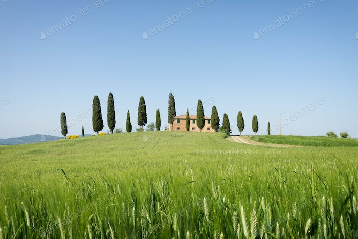 Farmhouse with cypress trees in Tuscany