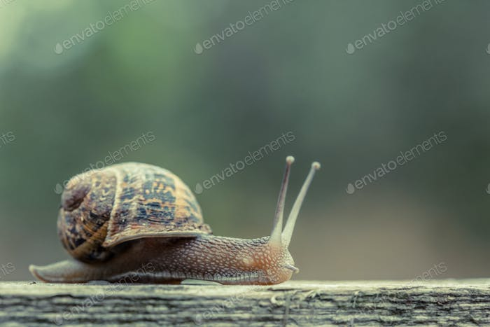 Close up of a small snail in the countryside