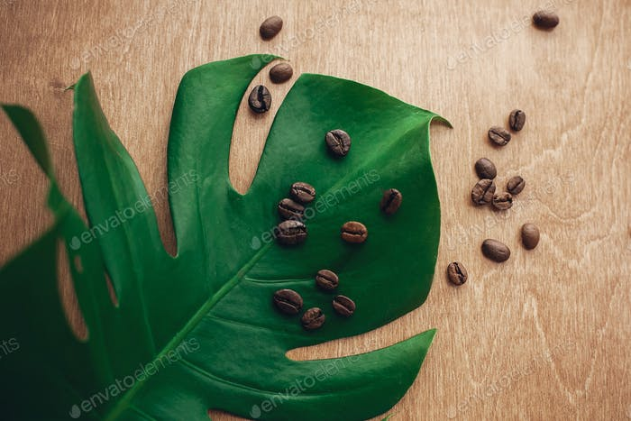 Roasted coffee beans on green monstera leaf on rustic wood