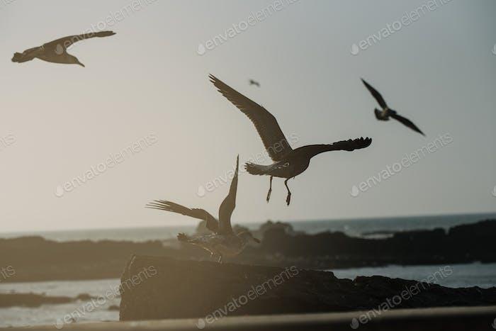 Seagull birds on the sky