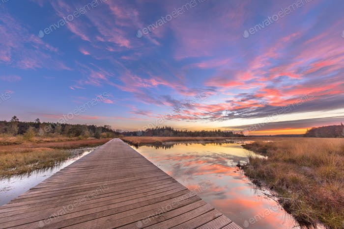 Boardwalk in natural heathland fen crop