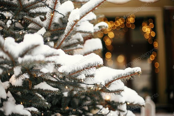 Stylish christmas trees with gold festive lights, covered with snow, at holiday market