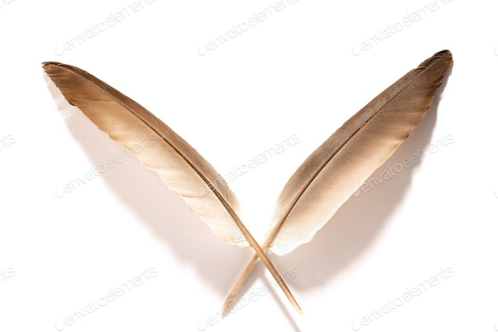 Feather on white background-3