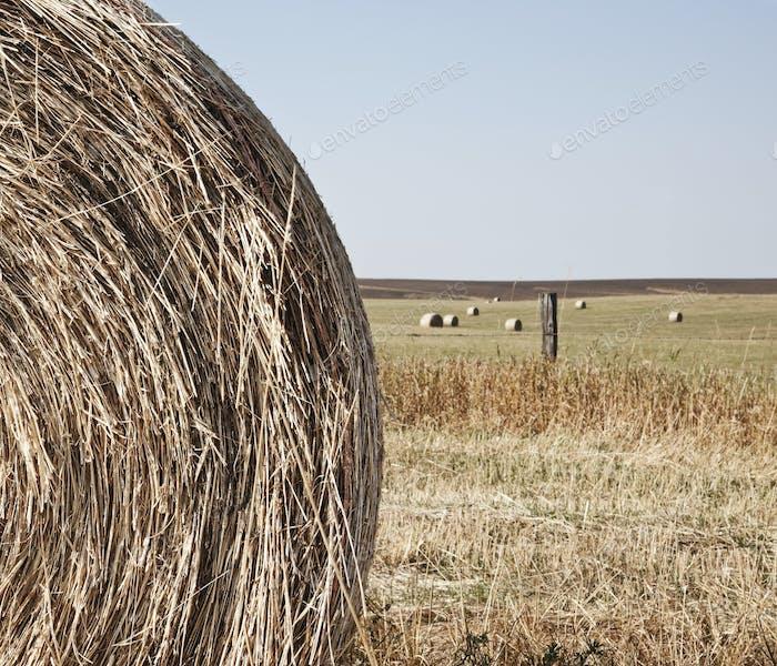Circular Hay Bale