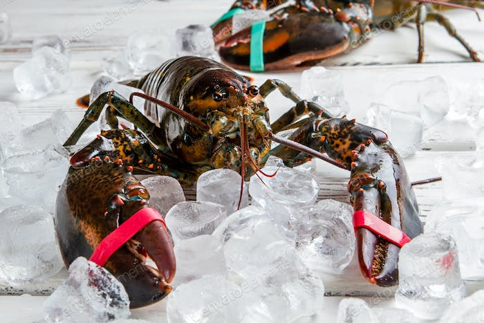 Raw lobsters with tied claws