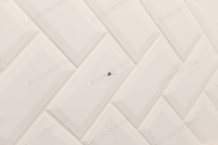Drilled hole in wall cladded with ceramic tile in bathroom