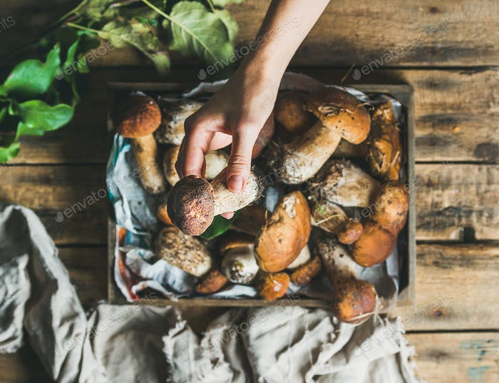 Porcini mushrooms in wooden tray and woman's hand holding mushroom
