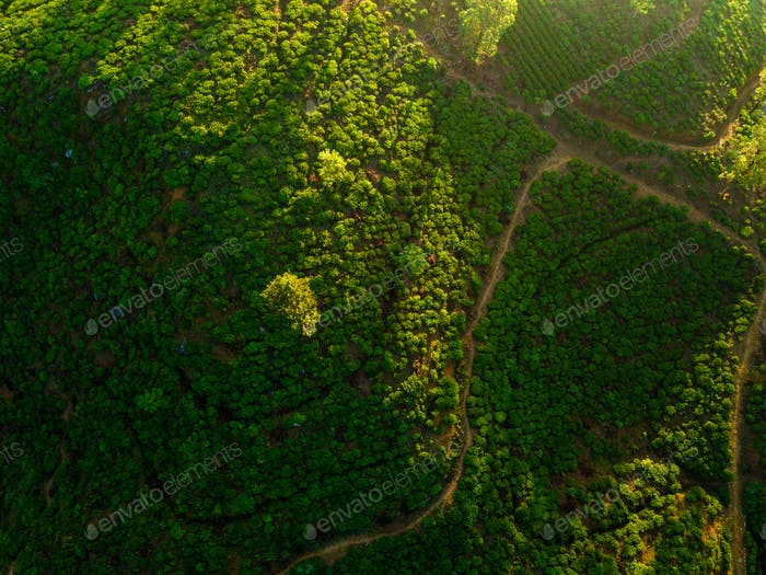 Aerial view of hills with tea plantation misty morning in Sri Lanka