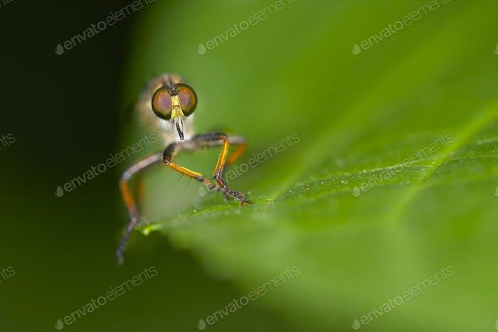 Nahaufnahme eines fliegenden Insekts, das auf einem grünen Blatt sitzt.