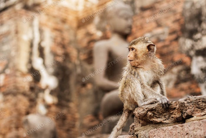 Monkey is sitting of temple