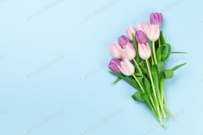 Pink tulips over blue background