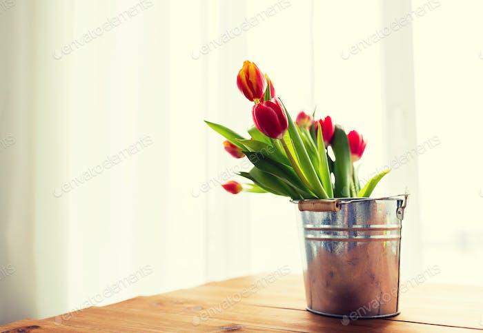 Nahaufnahme von Tulpenblüten