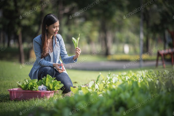 young smart farmer, Agriculture business startup