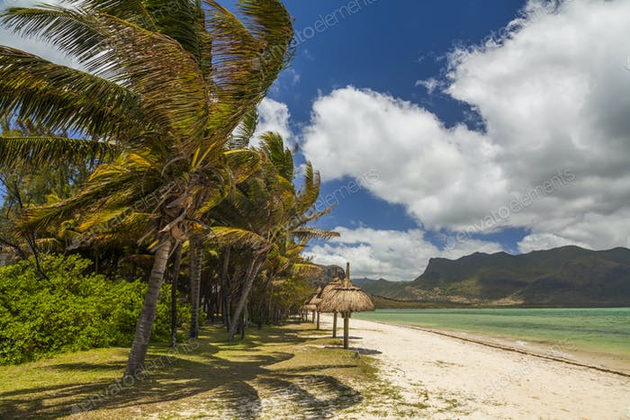 The shore of a tropical island with palm trees and white sand. M