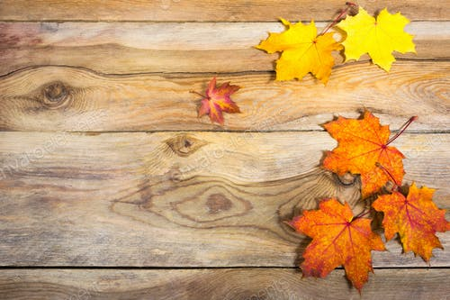 Thanksgiving Background With Vivid Fall Maple Leaves Copy Space Photo By TasiPas On Envato Elements