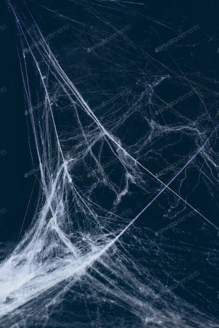 creepy halloween background with spider web
