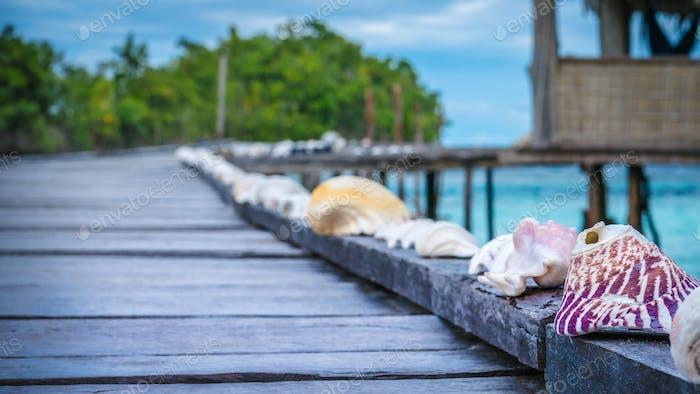 Muscheln auf Wooden Pier einer Homestay, Gam Island, West Papuan, Raja Ampat, Indonesien