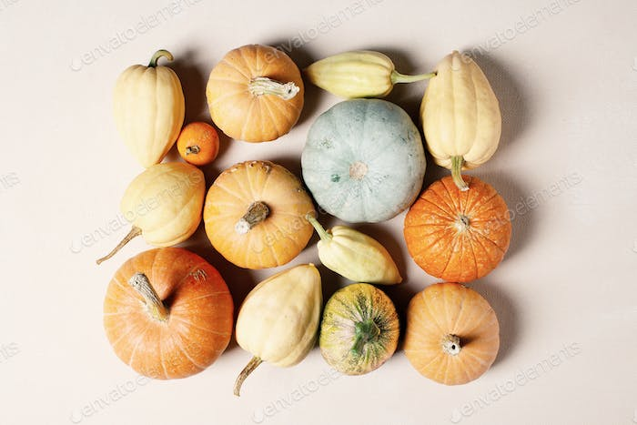Various pumpkins on the table, festive autumn composition