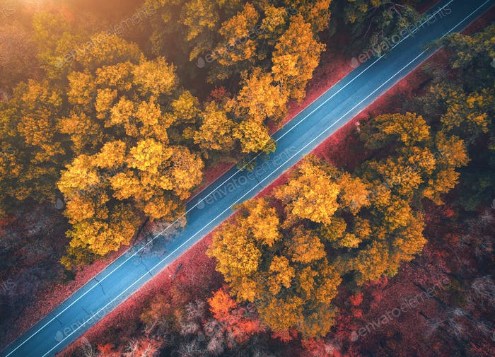 Aerial view of road in beautiful autumn forest at sunset