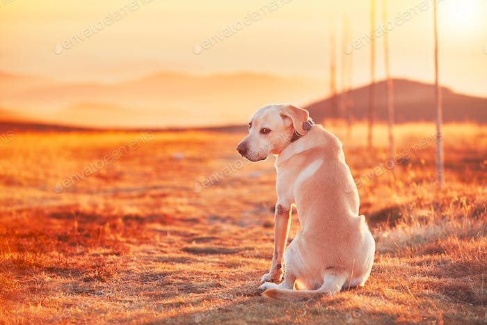 Dog at the sunset