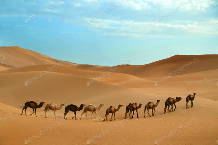 Wohnwagen in der Wüste