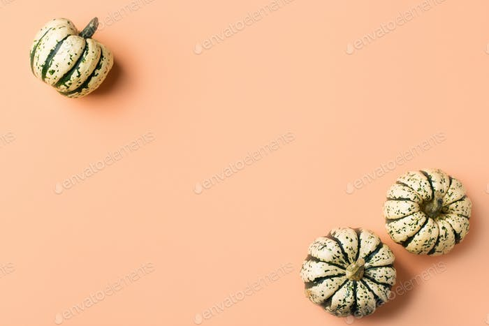 Autumn fall thanksgiving day composition with decorative pumpkins