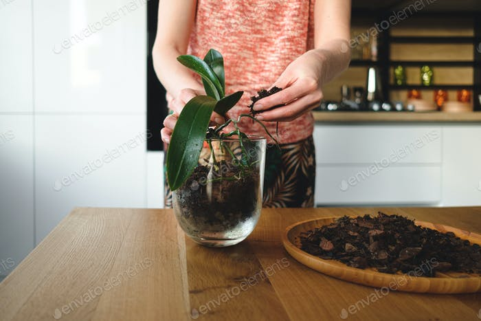 Woman hands planting a flower in the house