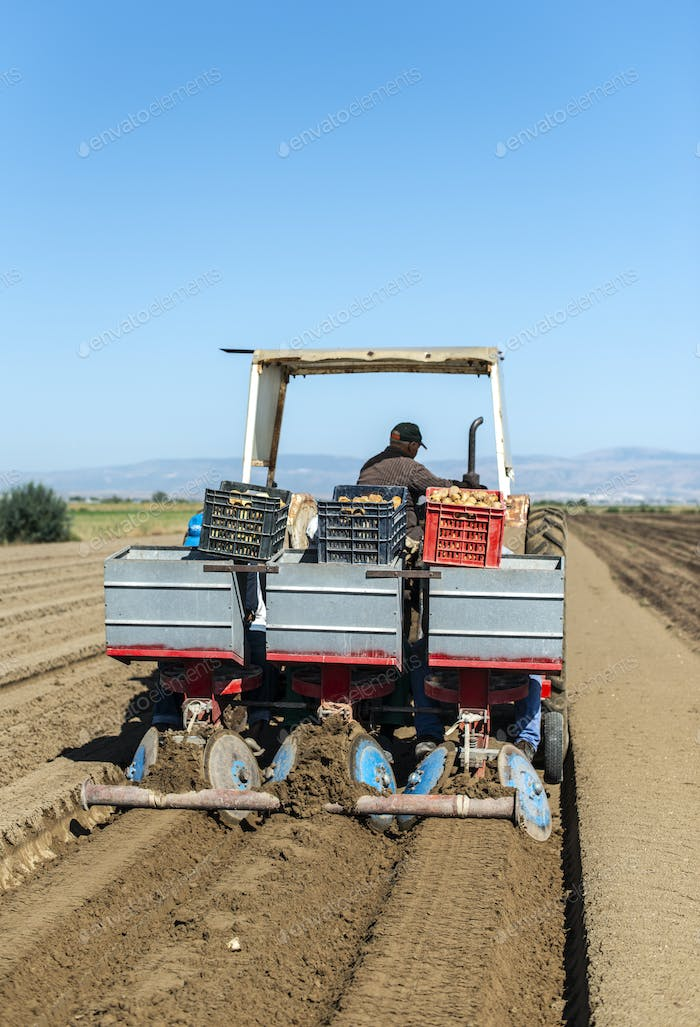 Tractor with crates planting potatoes