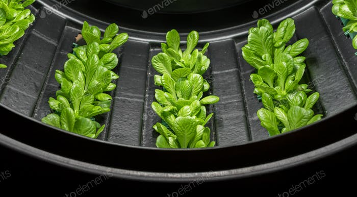 Vertical farm