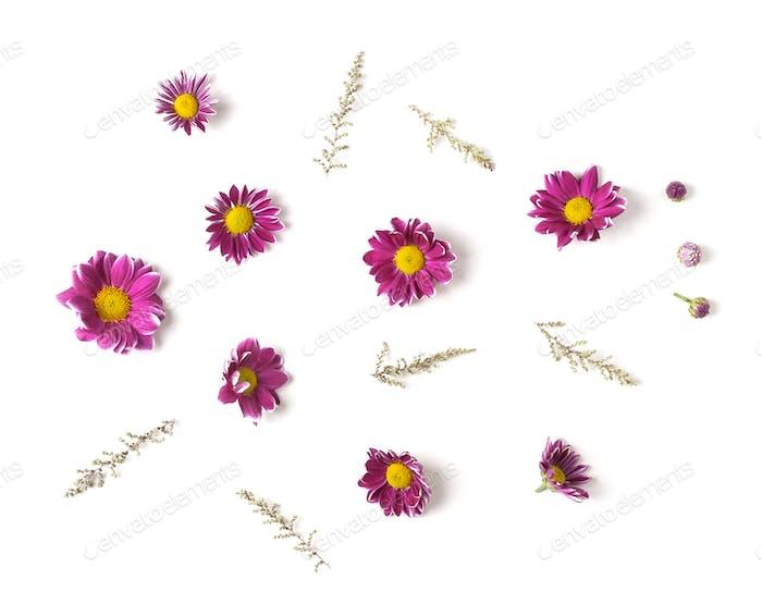 Knospen Chrysanthemen und Zweige. Isoliert auf weißem Hintergrund. ISO