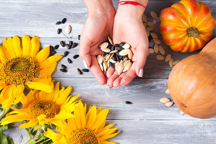 Different organic seeds are holding female hands on a gray wooden background