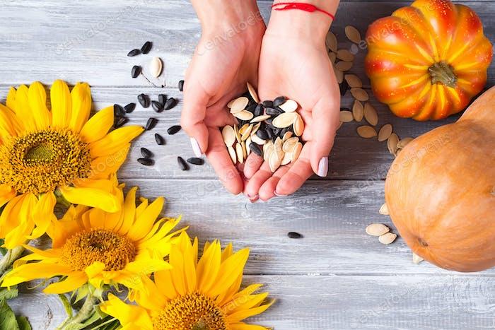 Verschiedene organische Samen halten weibliche Hände auf einem grauen Holzhintergrund