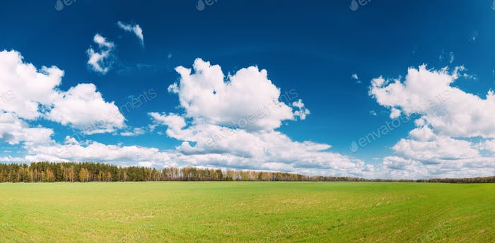 Countryside Rural Field Or Meadow Landscape With Green Grass On
