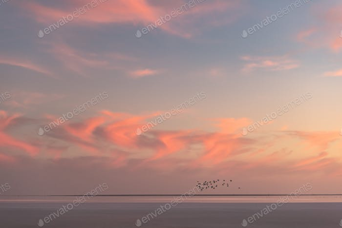 Sunset in the ocean with flock of birds